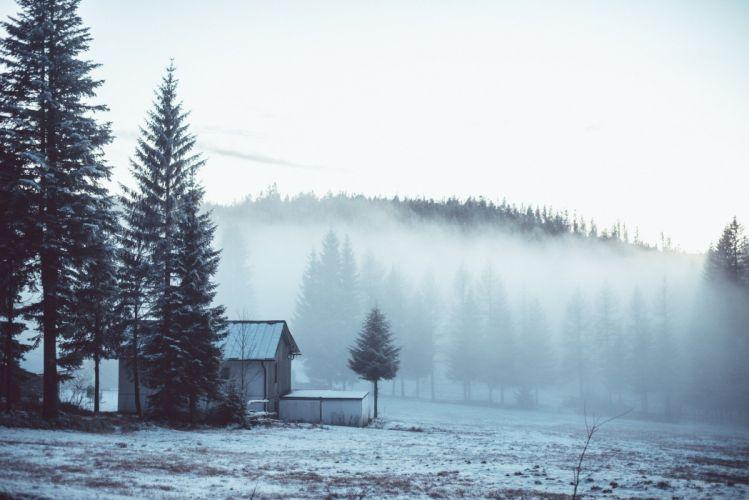 winter landscape mist trees wallpaper