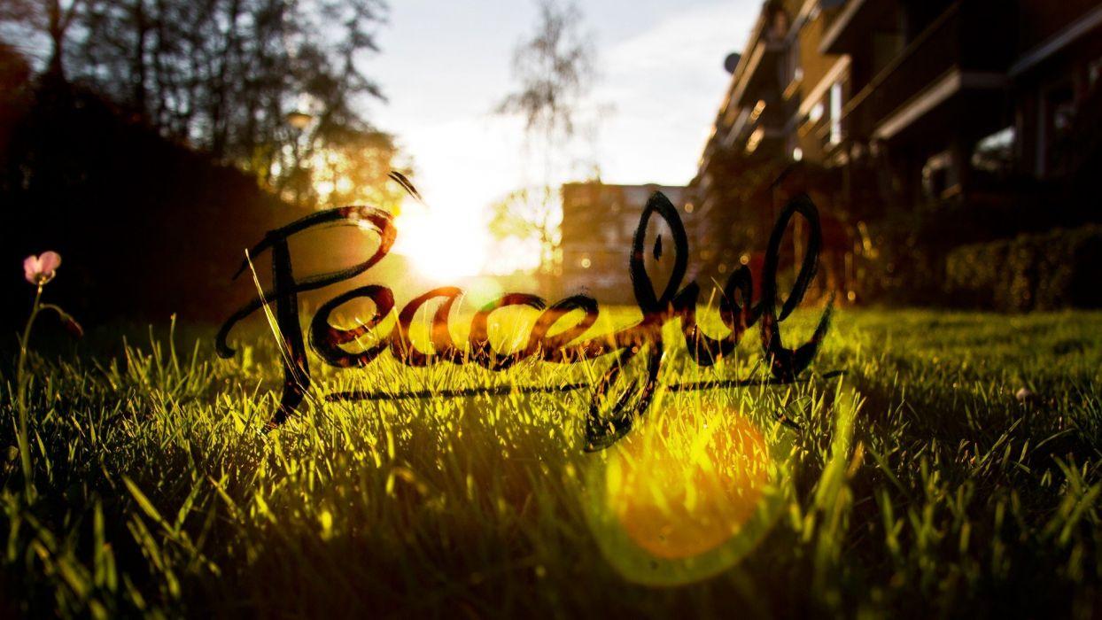 peaceful grass Sun blurred wallpaper