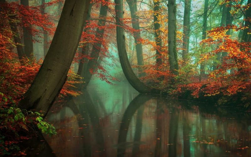 nature landscape mist forest fall river reflection red yellow peacefull wallpaper