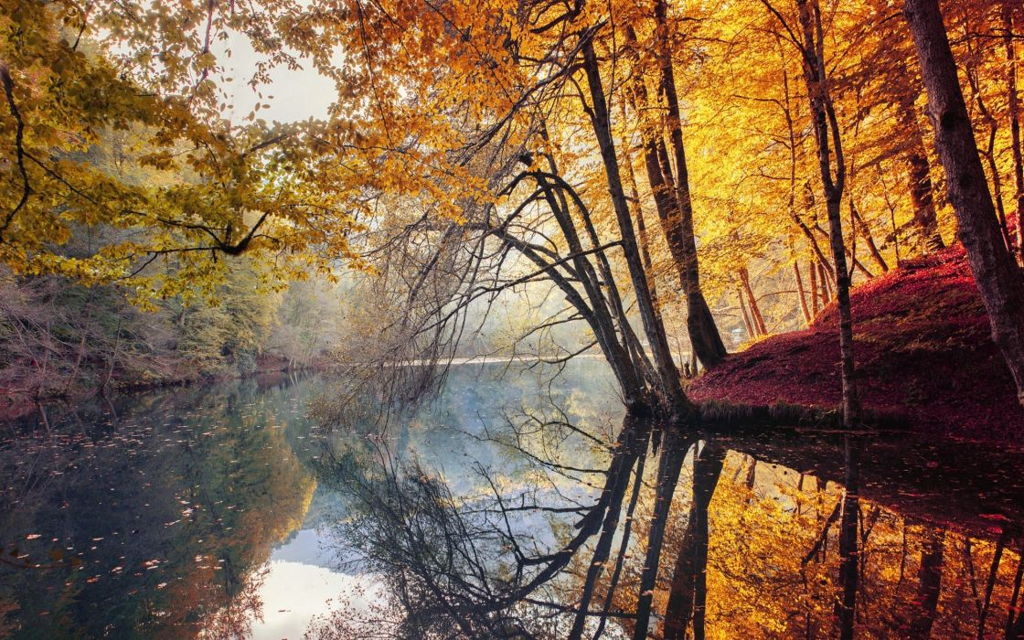 nature landscape fall trees yellow red leaves mist river water reflection Turkey colorful forest wallpaper