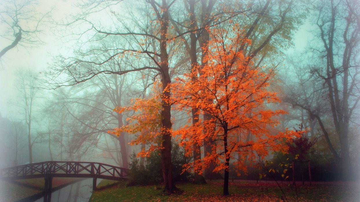 autumn landscape fog park wallpaper
