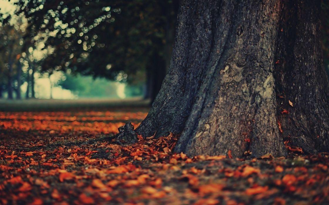 autumn fallen leaves landscapes leaves nature wallpaper