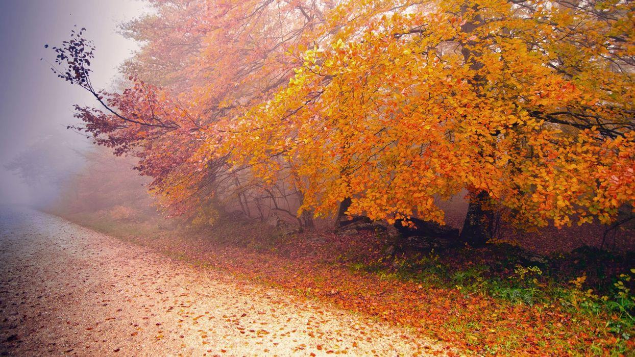 autumn tree leaf nature road wallpaper