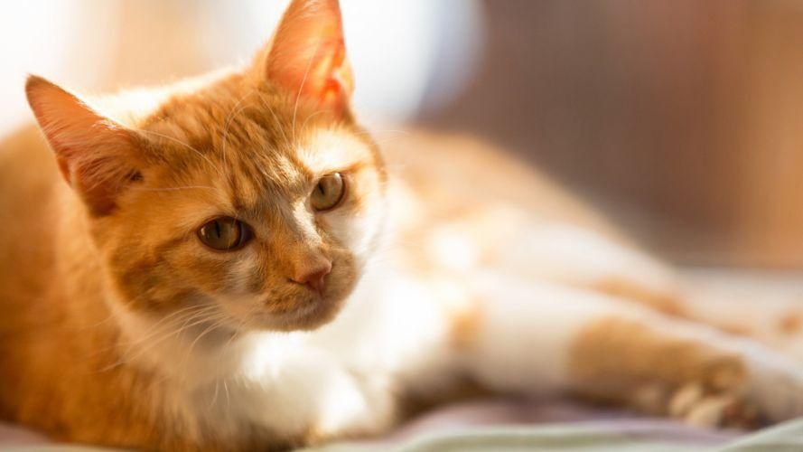 cute animal cat yellow wallpaper