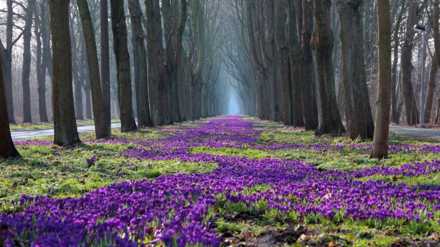 Nature beautiful flowers road wallpaper
