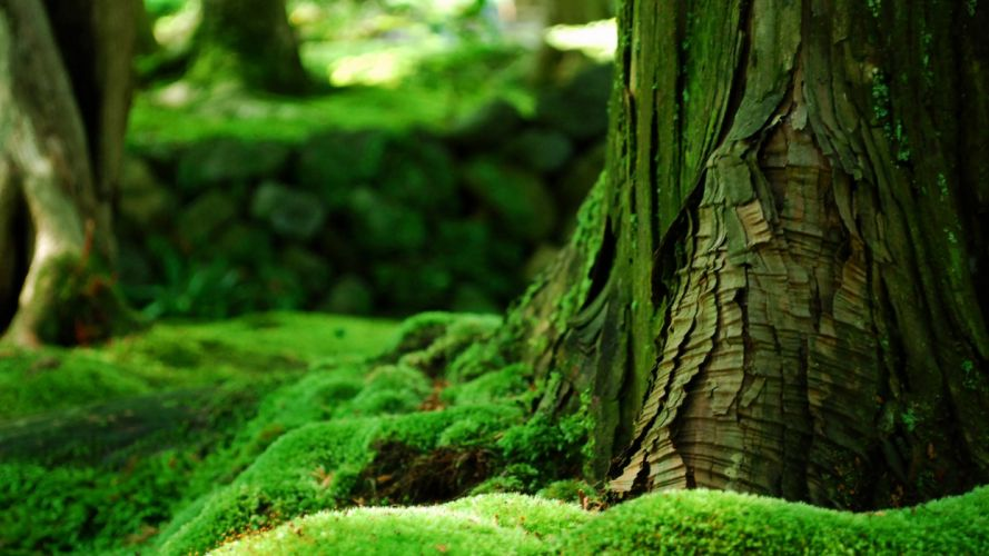 green forest beauty nature tree wallpaper