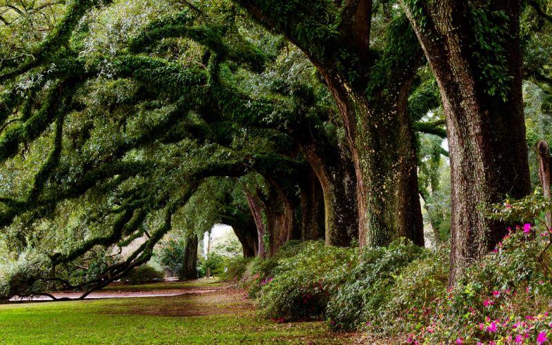 nature landscape beauty road tree wallpaper