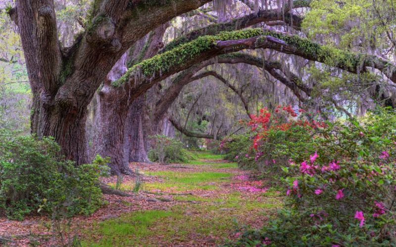 nature landscape beauty road flower tree wallpaper