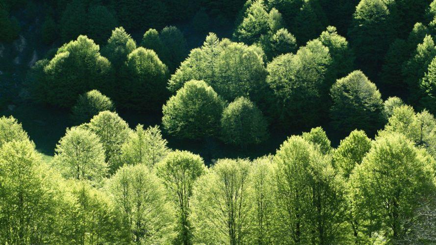 nature landscape beauty tree wallpaper