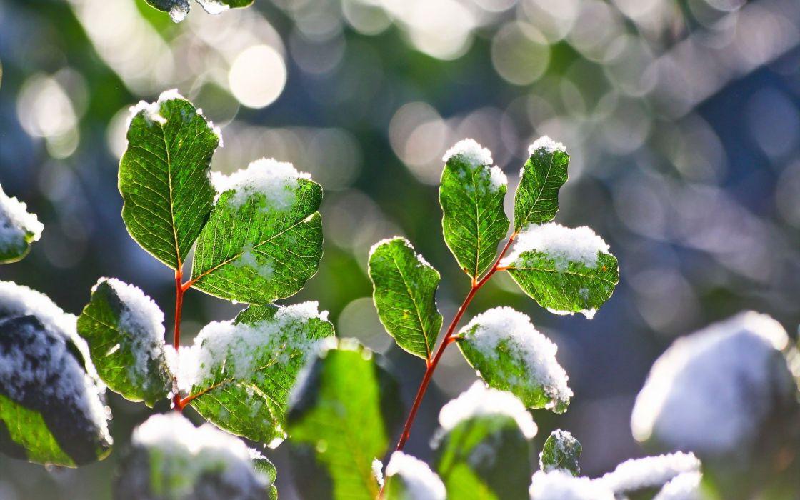 Nature Landscape Beauty Flower Sunlight Snow Wallpaper