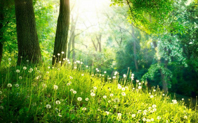 nature landscape beauty flower sunlight wallpaper