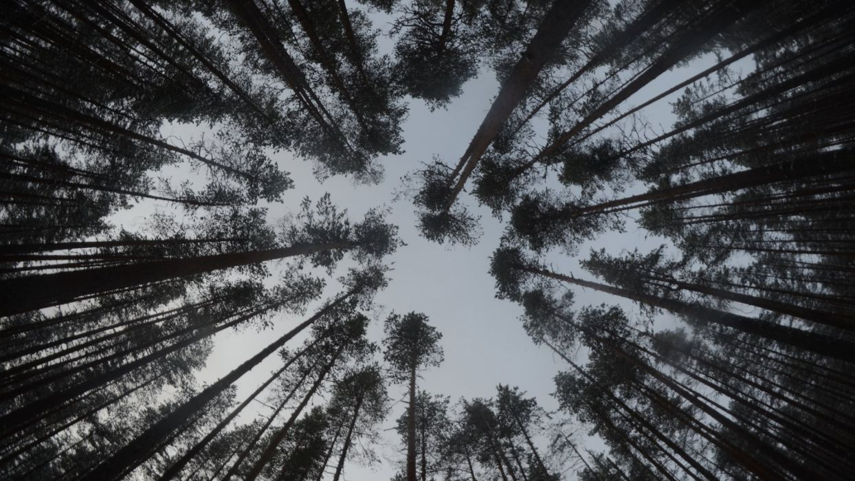 nature landscape beauty forest tree wallpaper
