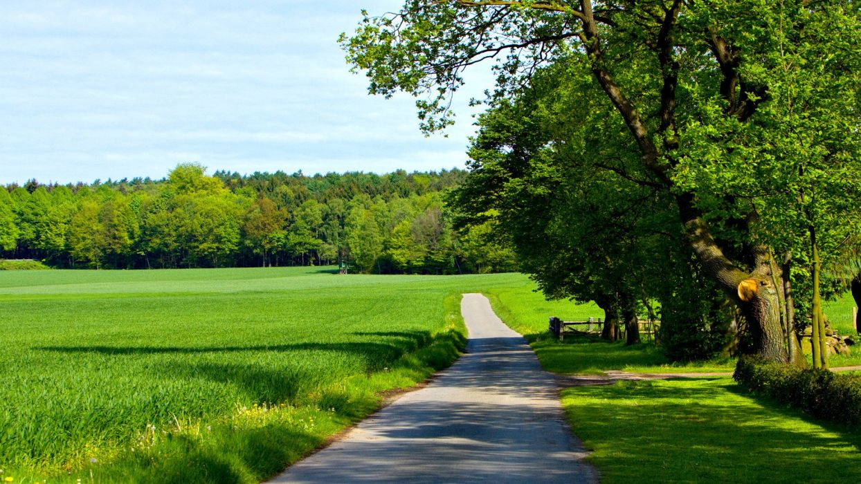 Summer road woods green crops landscape wallpaper