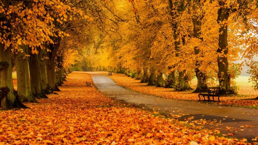Foliage trees forest park meadow road autumn colors wallpaper