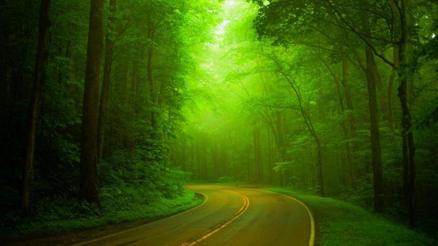 Nature green forest woods highway hazy green landscape wallpaper
