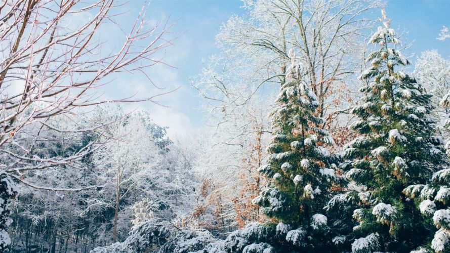 nature beauty winter tree snow wallpaper