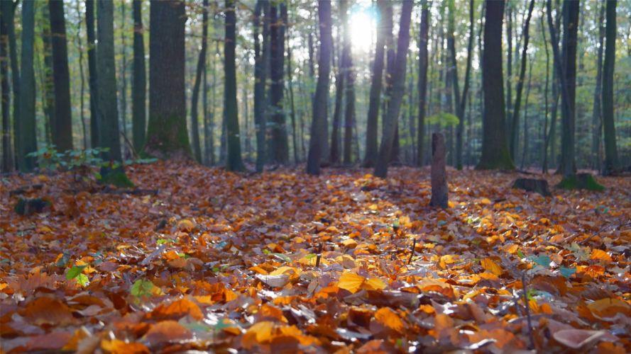 nature beauty landscape autumn tree leaves wallpaper