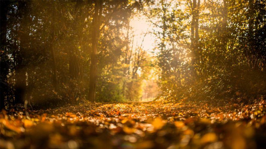 sunlight nature beauty landscape autumn tree wallpaper