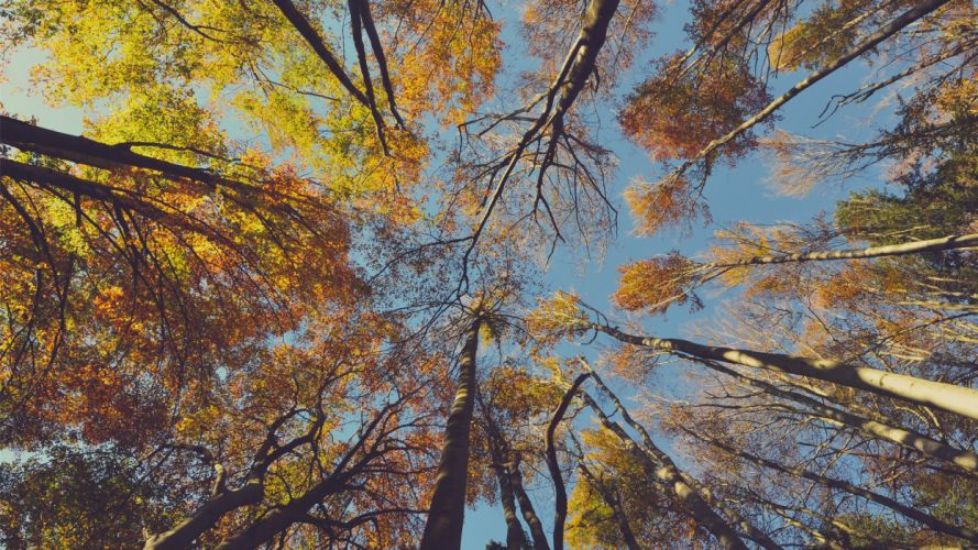 sky nature beauty landscape autumn tree wallpaper
