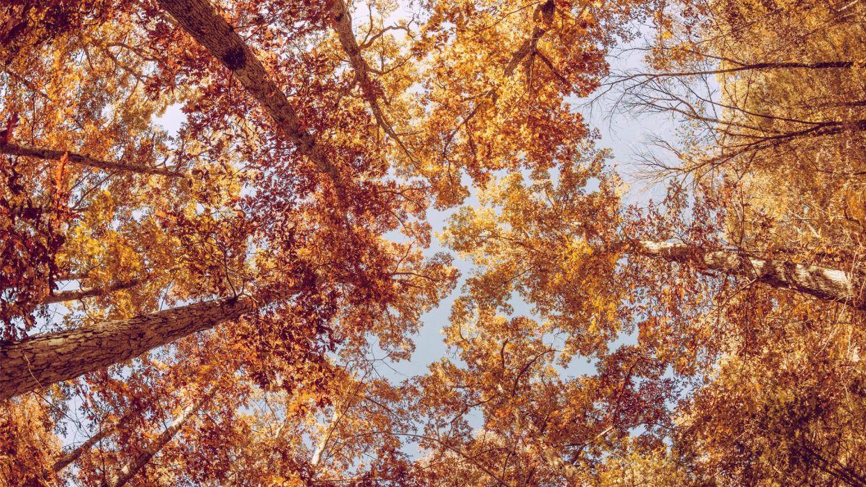 nature beauty landscape autumn tree sky wallpaper