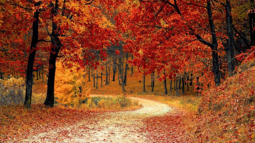 nature beauty landscape autumn tree road wallpaper