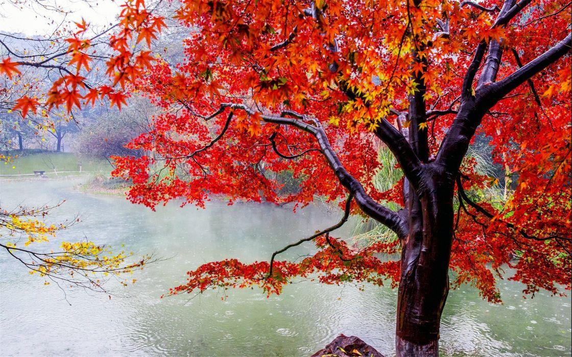 Beautiful autumn maple leaf fresh photography rain wallpaper