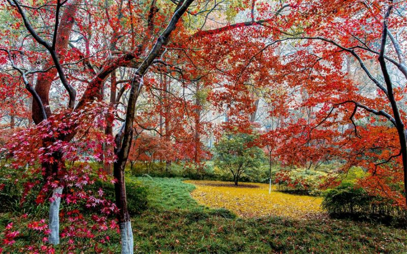 Beautiful autumn maple leaf fresh photography wallpaper