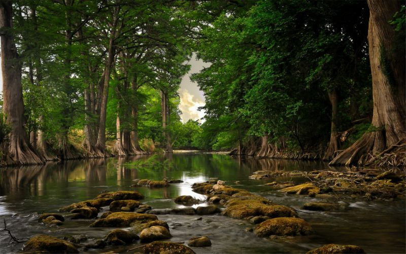 Beautiful natural river forest wallpaper