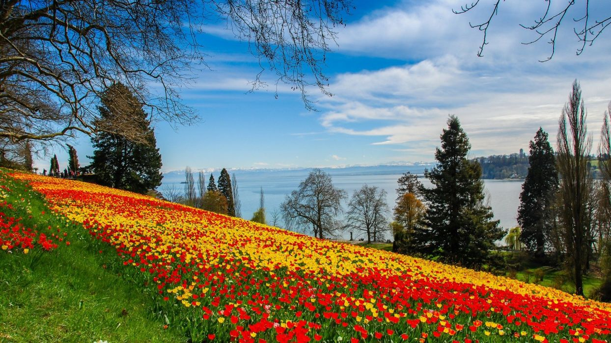 flower beauty Mountain Tulip Natural wallpaper