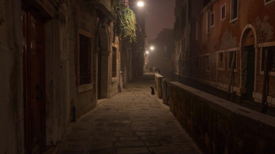 street cat lamb night light city wallpaper