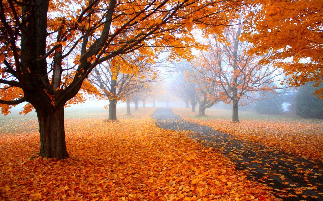 autumn tree leaves nature wallpaper
