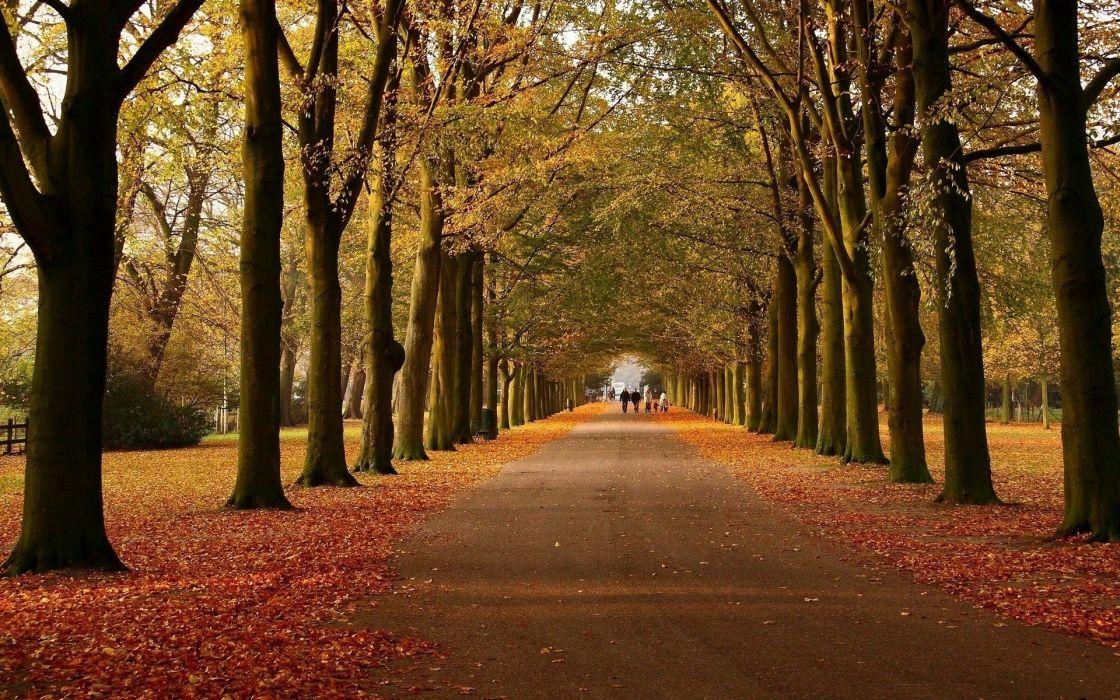 Autumn Avenue Walk Way wallpaper