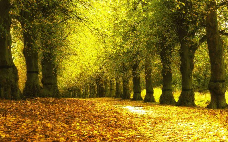 Autumn park yellow leaves sidewalk trees natural landscape wallpaper