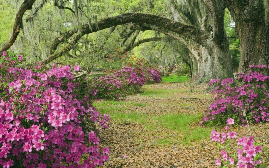 Forest trees meadows azaleas landscape wallpaper