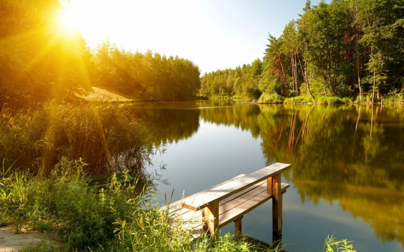 Summer river forest sun landscape wallpaper