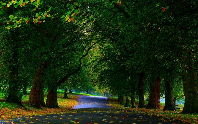 Parks trees green sidewalks fallen leaves beautiful natural landscape wallpaper