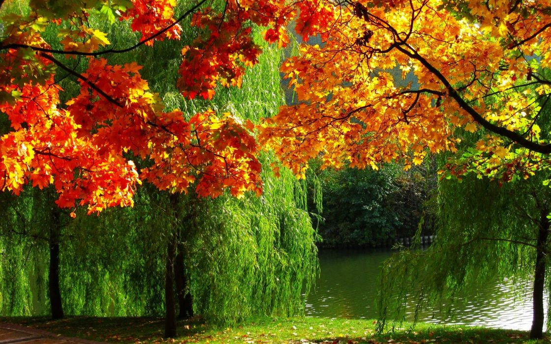 Forest nature autumn leaves river ultra high definition landscape wallpaper