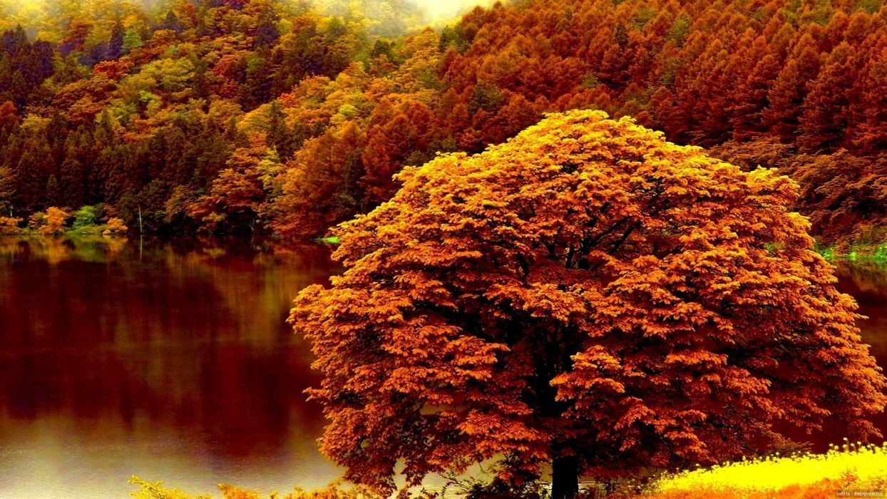 autumn tree lake forest nature wallpaper