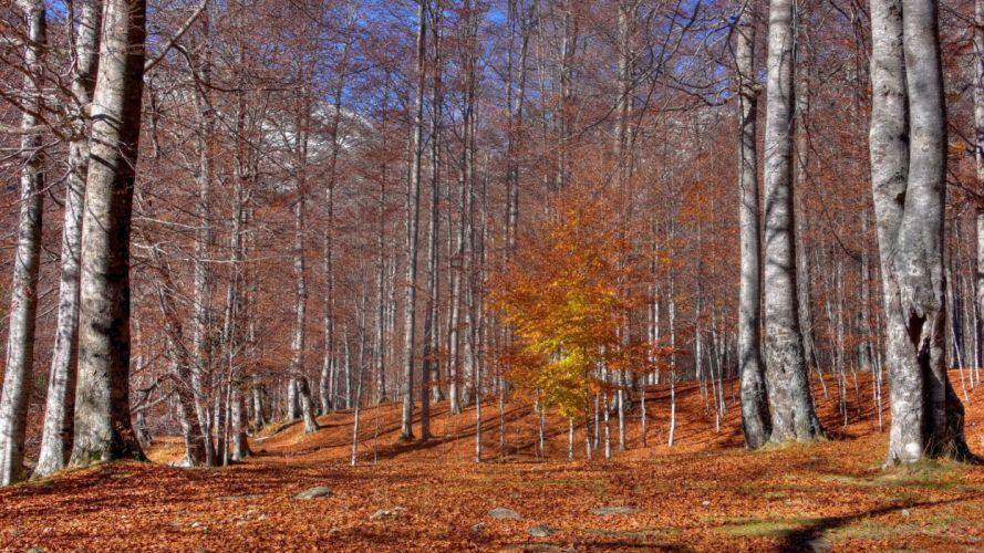 autumn trees leaf fall october trunks indian summer wallpaper