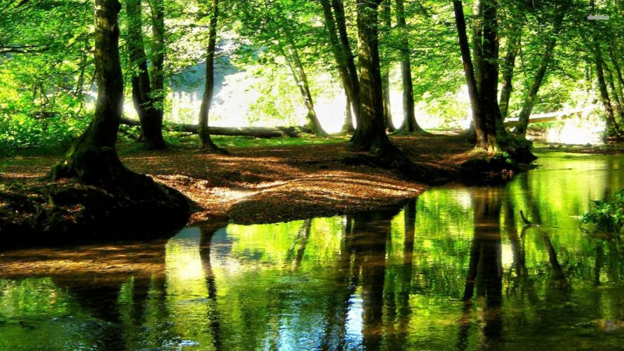 Forest stream tree nature wallpaper