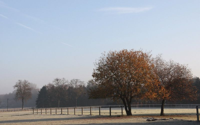 field fence trees frosts morning hoarfrost cool autumn october wallpaper