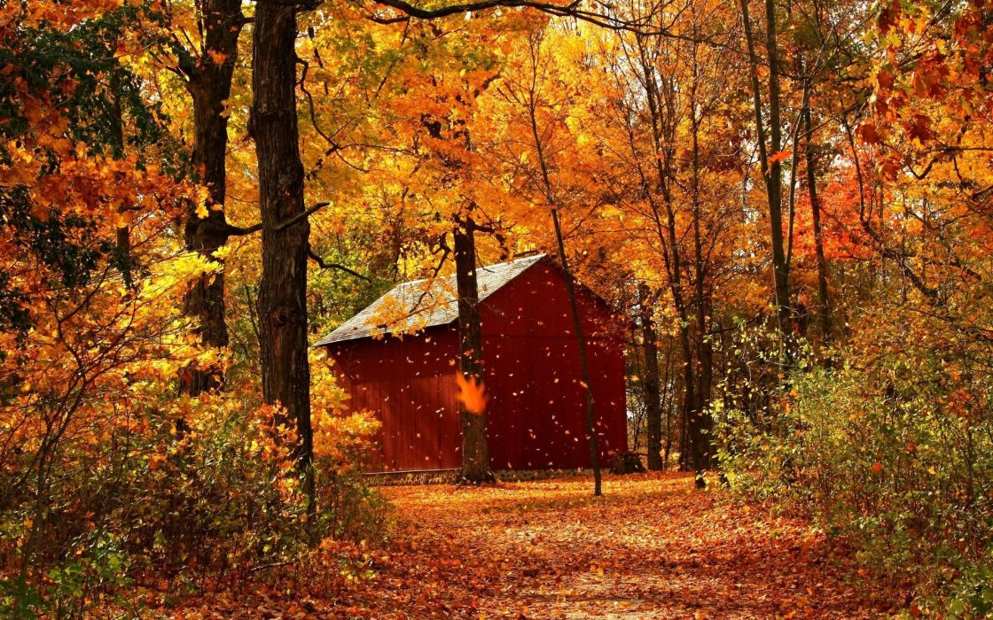 leaf fall autumn garage wood trees october wallpaper