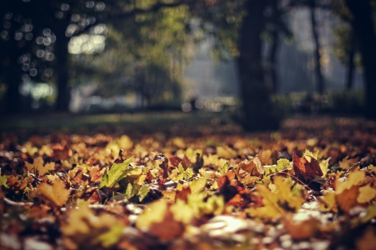 leaves october light autumn park wallpaper
