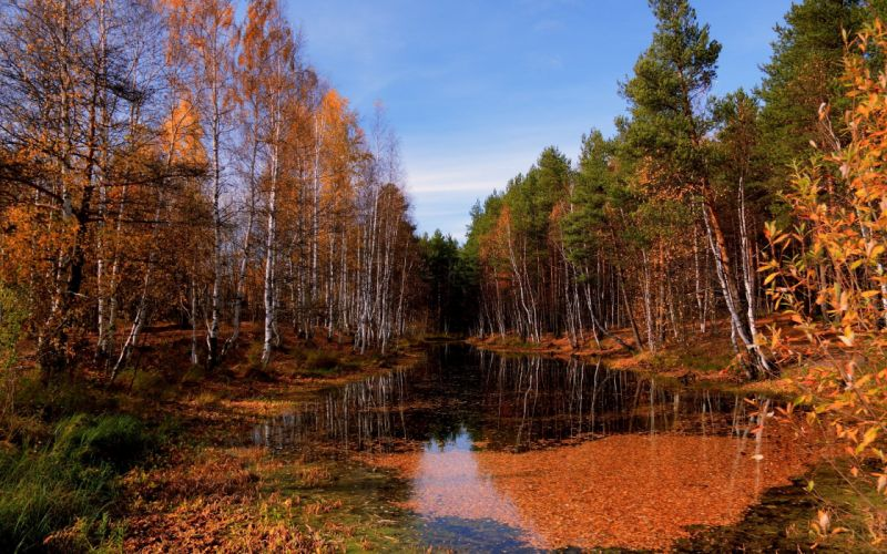 lake autumn trees leaf fall water surface sky clearly october pool wallpaper