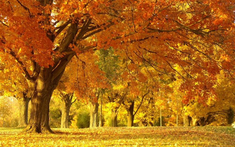 wood trees very much october silence avenue colors wallpaper