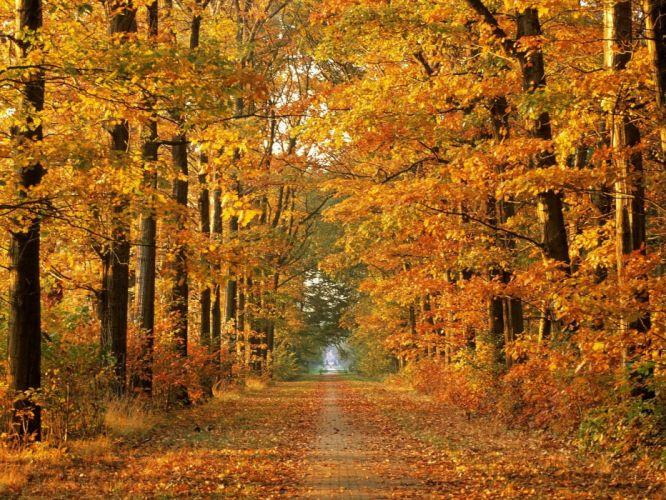 Road Autumn Trees Avenue Leaf fall October Way wallpaper