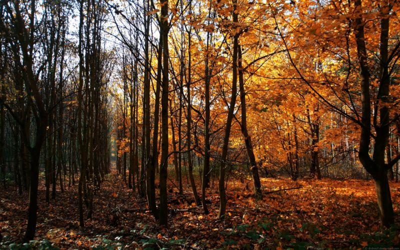 wood young growth autumn leaf fall trees naked october wallpaper