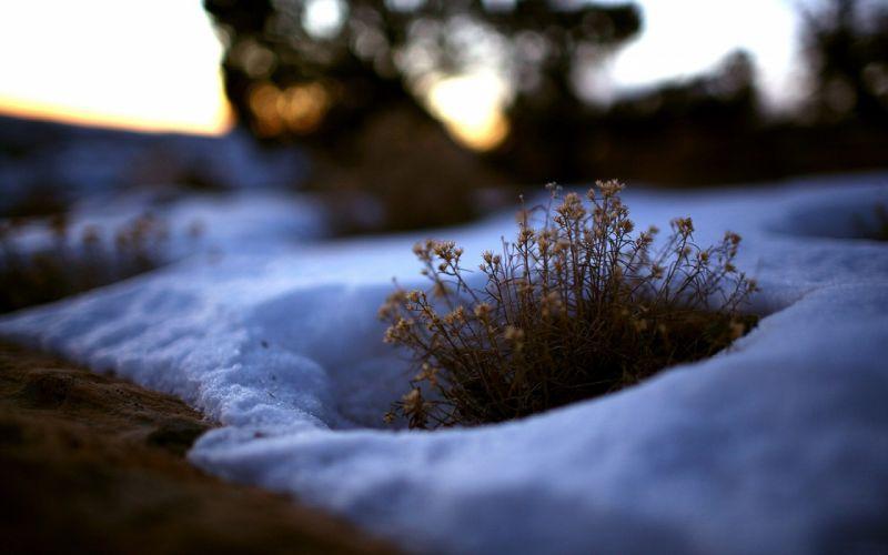 Snow sleep winter flower wallpaper