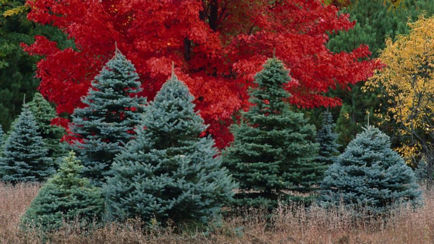 Mixed forest tree red wallpaper