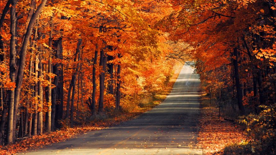 Road forest wallpaper